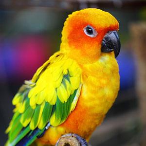 Ensuring Your Pet Bird Receives Adequate Sleep