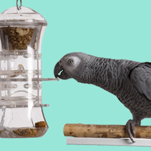 Providing your Bird with Intellectual Stimulation