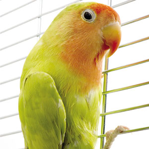 Bacterial Infections in Birds