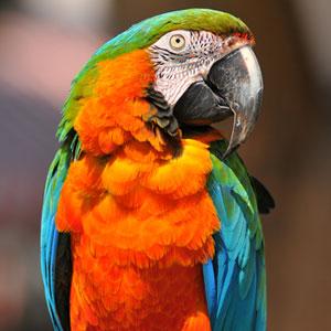 Common Household Dangers for Pet Birds
