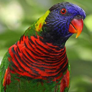 Is Your Bird Sick?