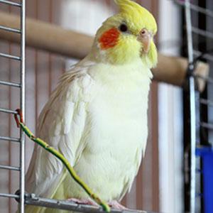 Egg Binding in Birds
