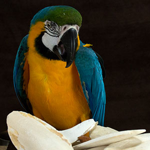 The Benefits of Cuttlebone for Birds
