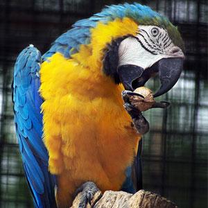 Feeding Your Bird: Seeds vs. Pellets
