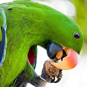 Tips for Feeding Your Bird