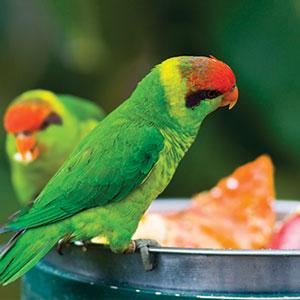 Let's Explore Treat Options for Your Pet Bird