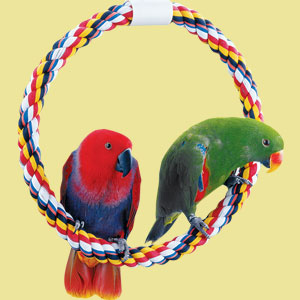 Choosing a Perch for your Bird