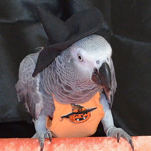 Halloween Bird Safety Tips