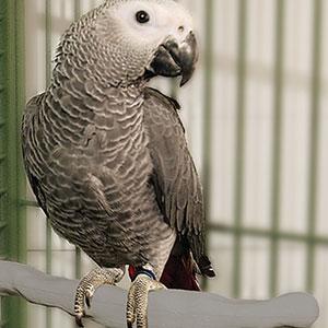 Preparing Your Pet Bird for Winter
