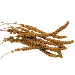 Spray Millet